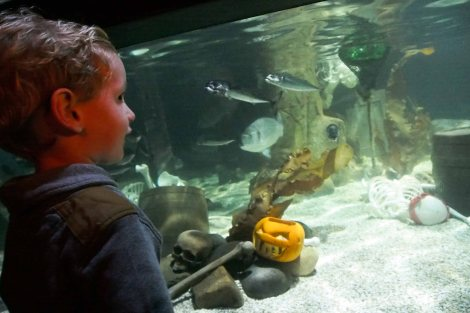 Aquarium Halloween fun at Alton Towers
