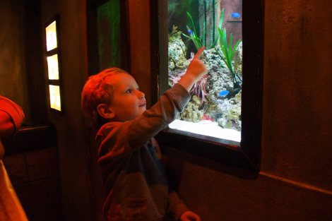 """A Nemo fish Mummy!"""