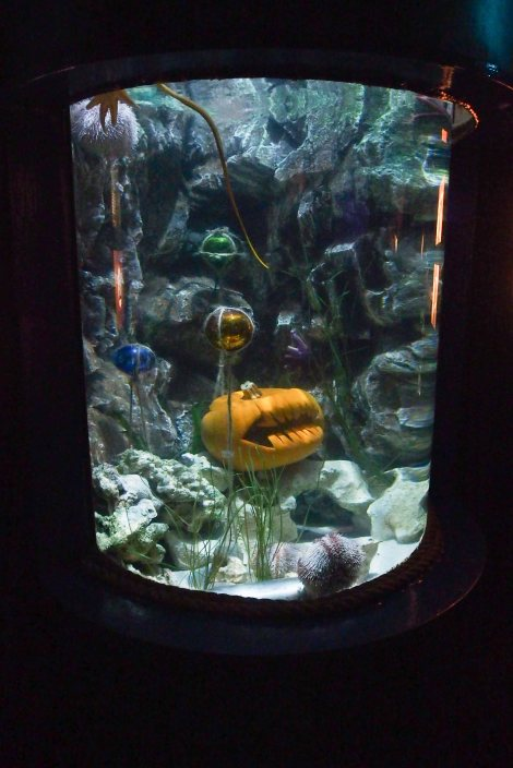There were even pumpkins in the water!