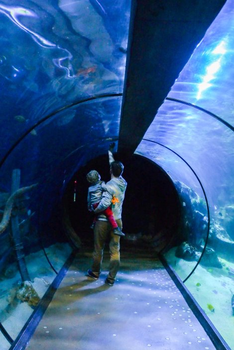 Spying for sharks at the Aquarium